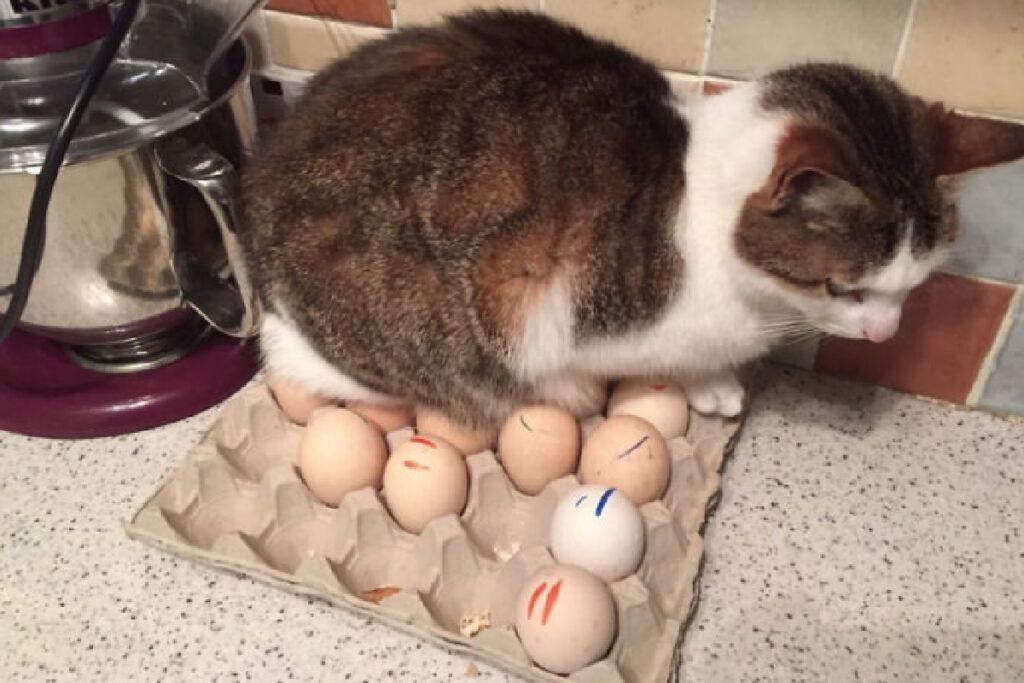 gatto dorme su uova