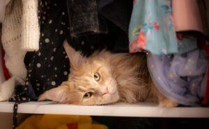 foto che ci dimostrano la confusione dei gatti