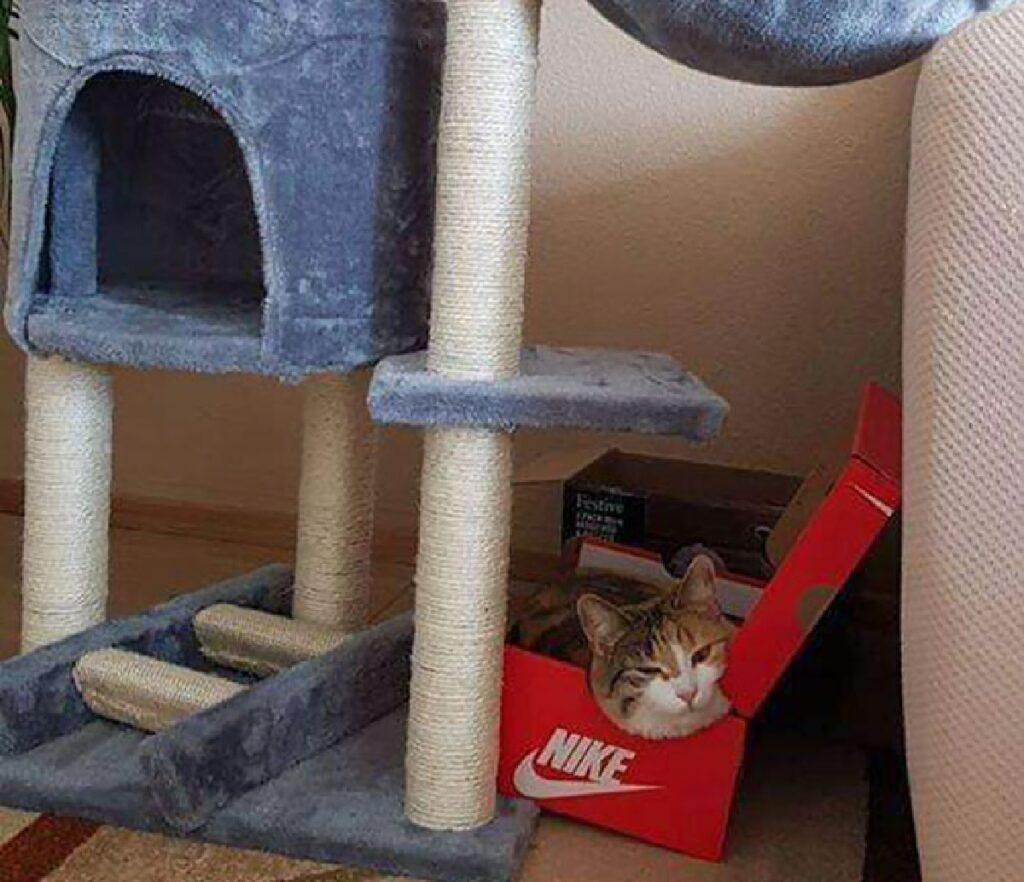 gatto albero felino non piace