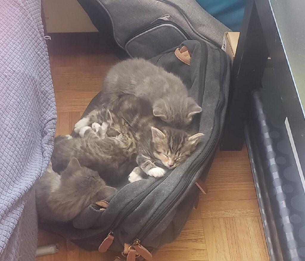 gruppo di gatti su una borsa