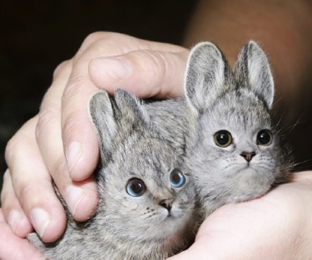 piccoli topolini su mano