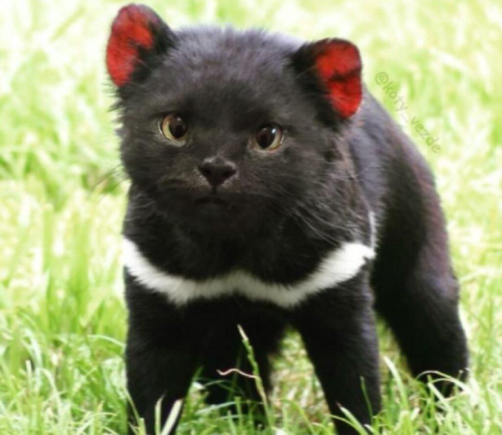 piccolo orsacchiotto pelo nero