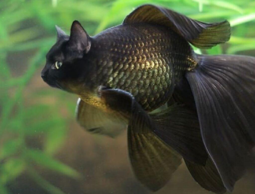 pesce nero pinne lunghe