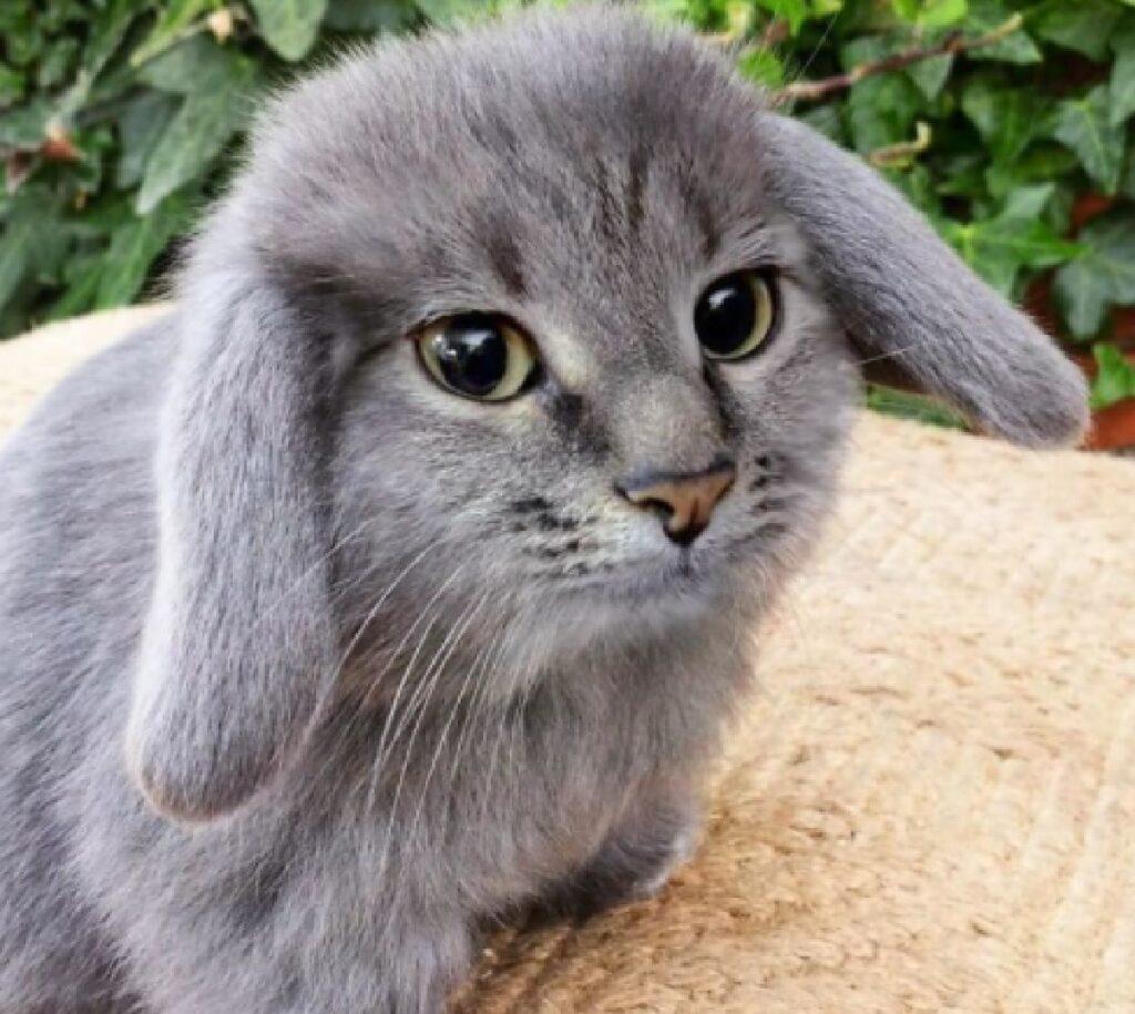 gatto coniglio pelo morbido