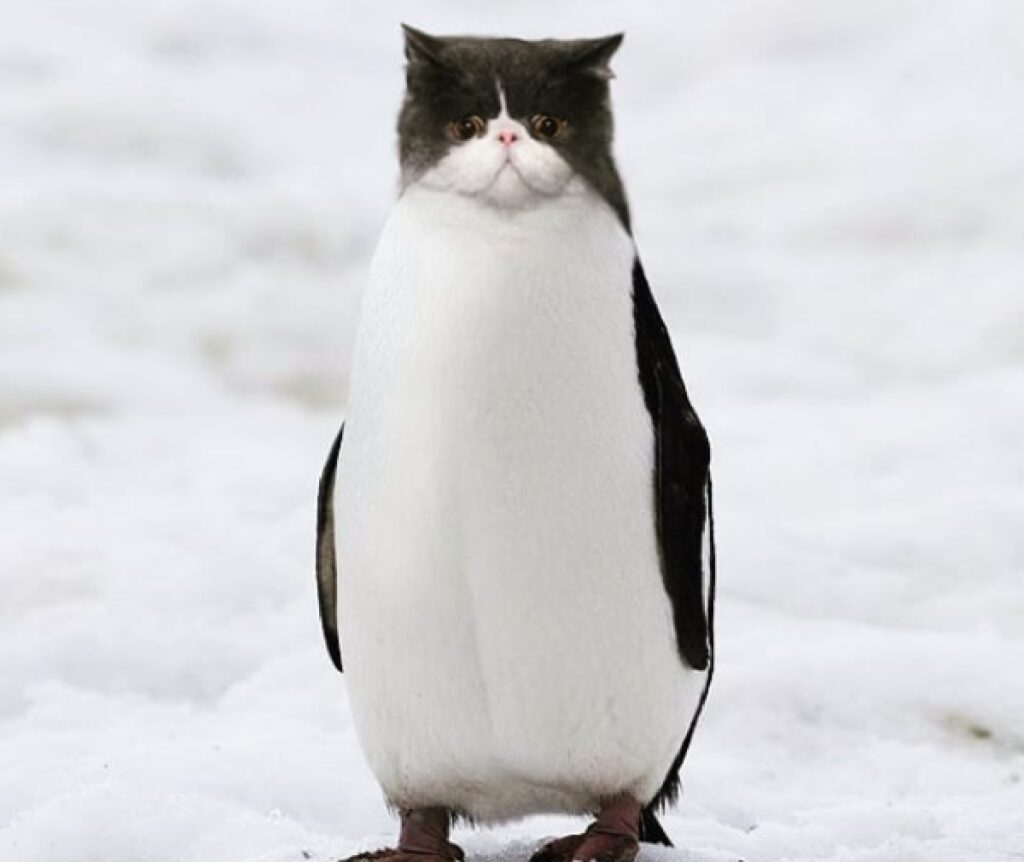 gatto pinguino bianco nero