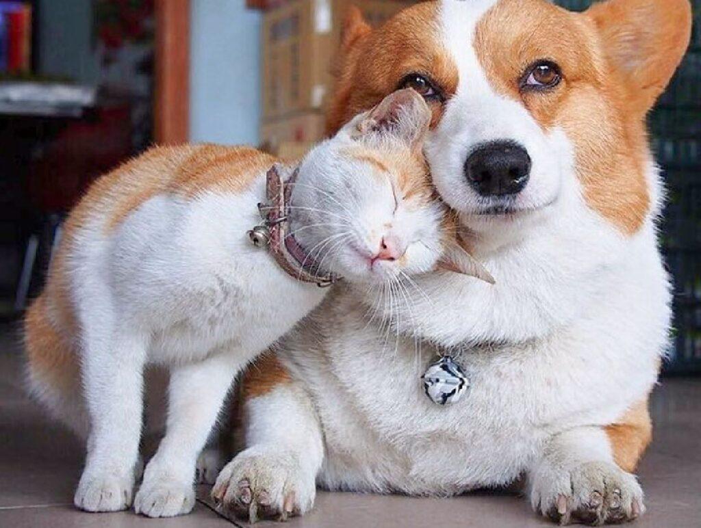 gatto abbraccia cane con testa