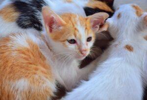 gatti condividono giornate con amici unici