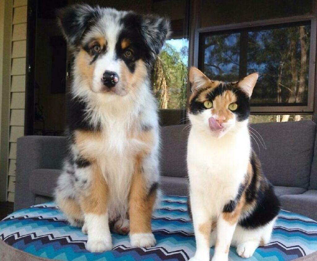 gatto e cane colori pelo