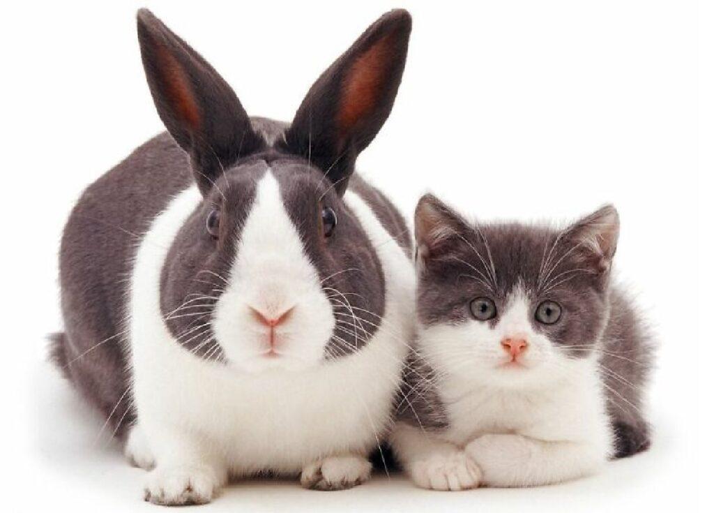gatto stesso colore coniglio