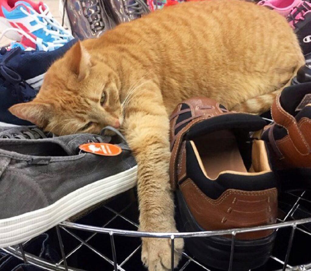 gatto abbraccia scarpe