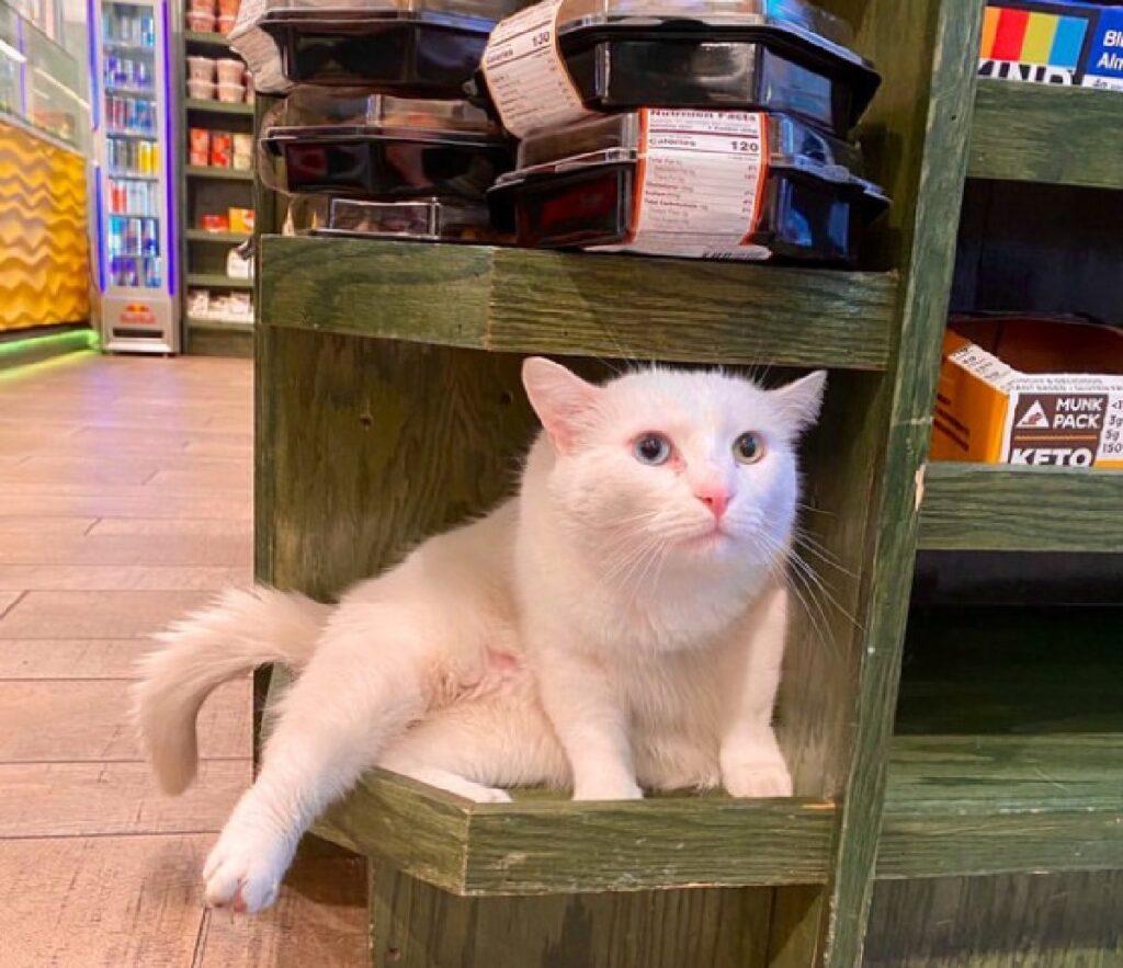 gatto bianco fra scaffali