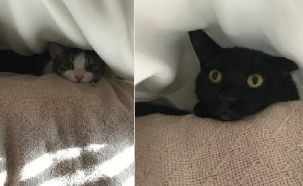gatto nero sotto coperte
