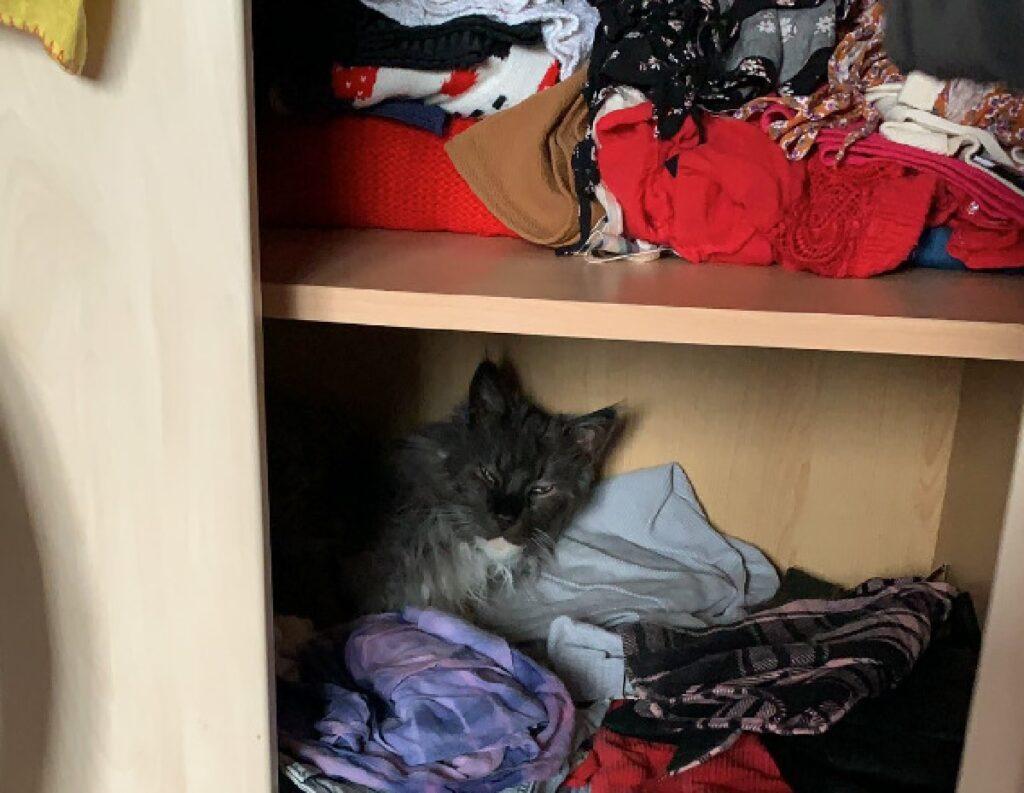 gatto dentro guardaroba