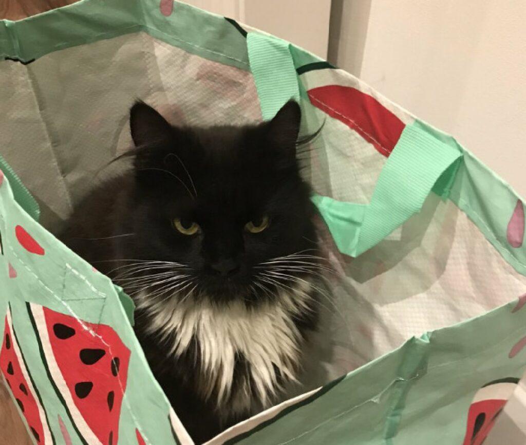 gatto nascosto dentro busta della spesa