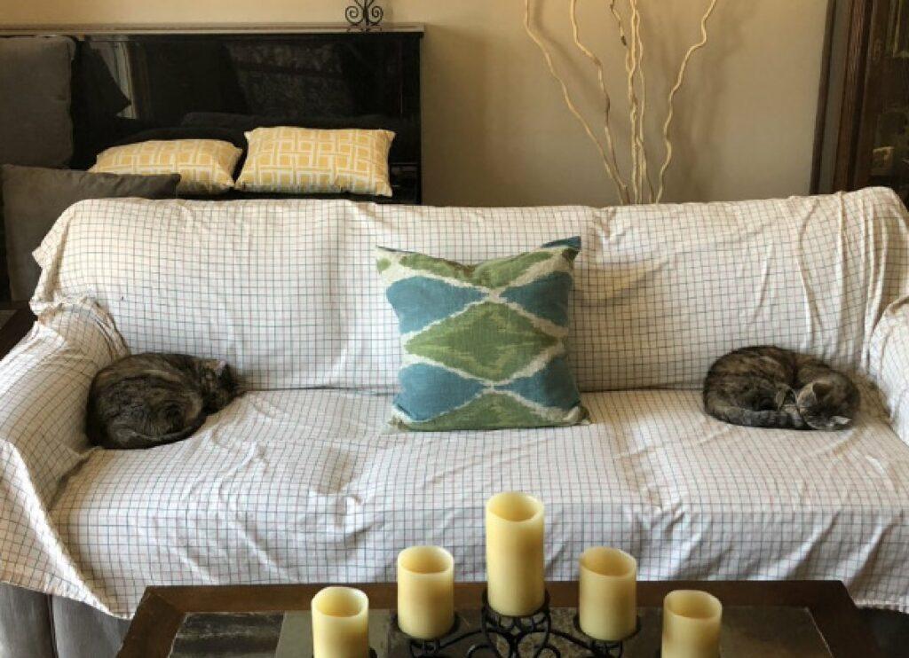 gatti sembrano cuscini