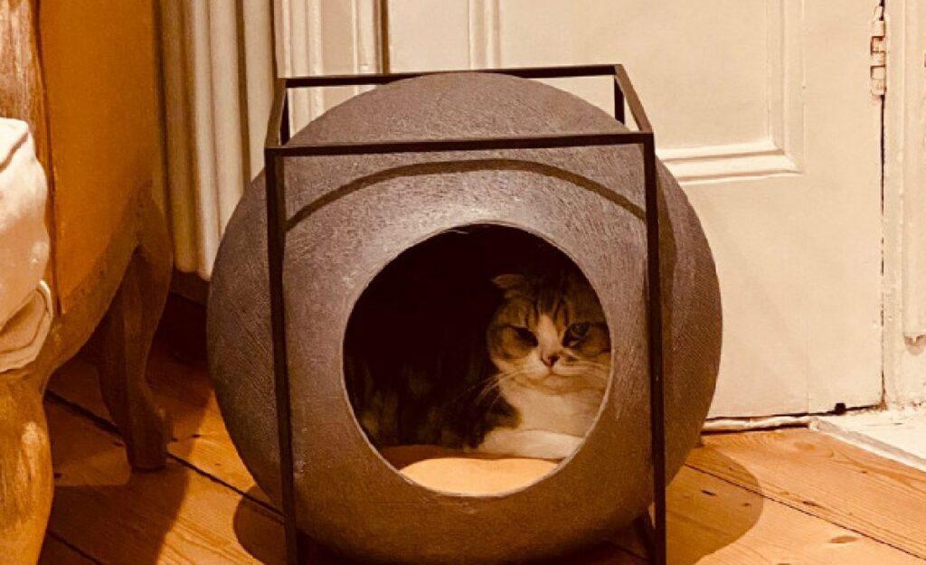 gatto dentro sfera cuccia