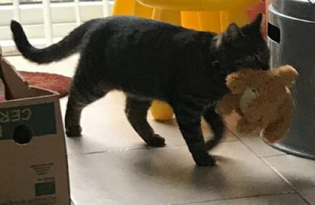 gatto ruba giochi cane