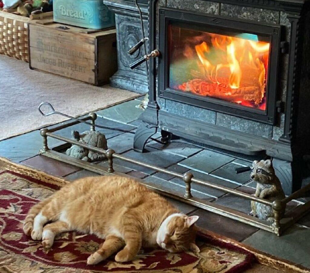 gatto rosso davanti camino