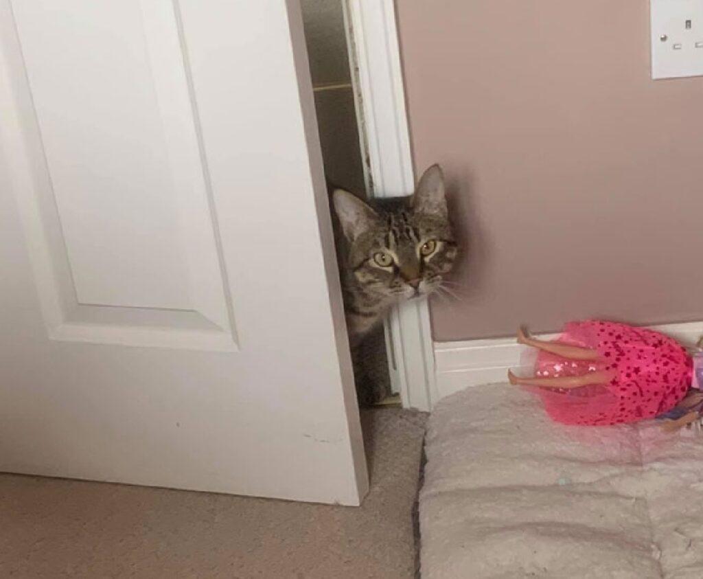 gatto si affaccia da porta