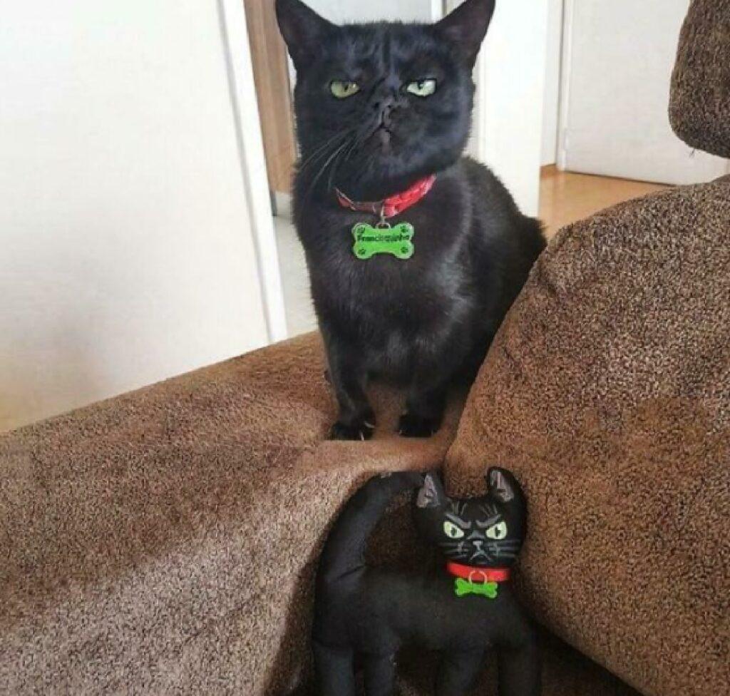 gatto nero collare rosso