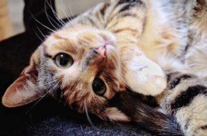 gatti che hanno mandato in confusione tutti