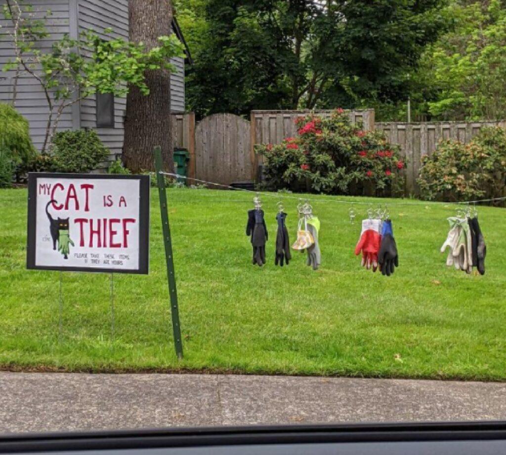 gatto ruba guanti di altri