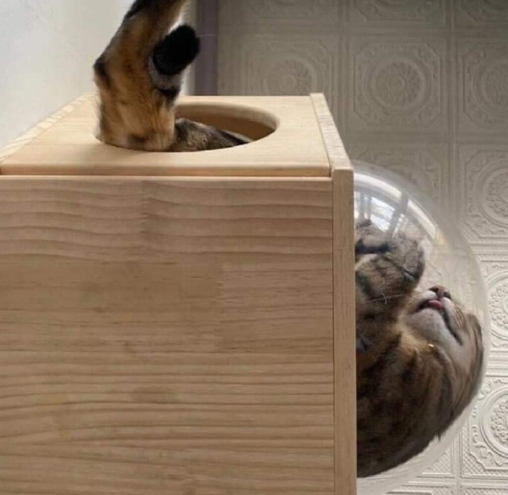 gatto finisce dentro contenitore