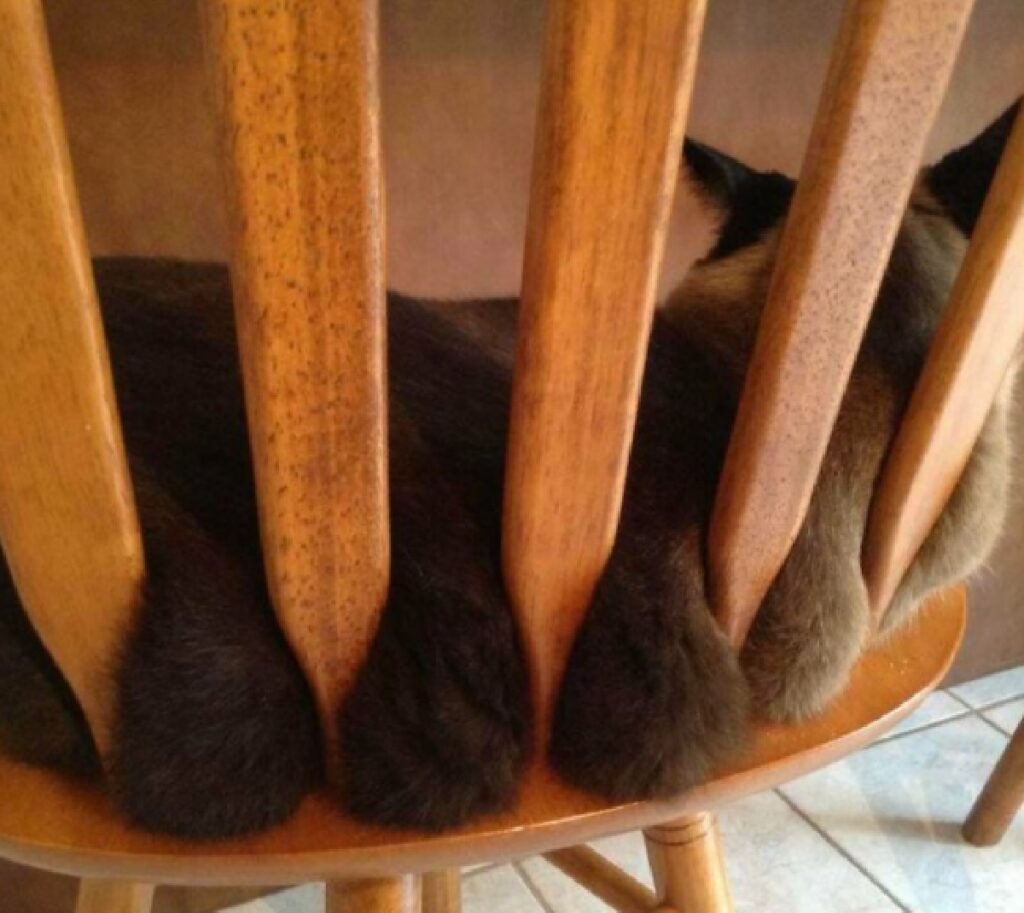 gatto rotoli pelo