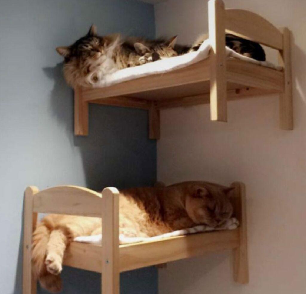 gatti letto coppia stanza