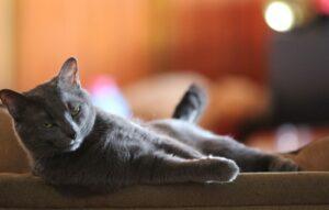 gatti che hanno ricevuto letto come regalo
