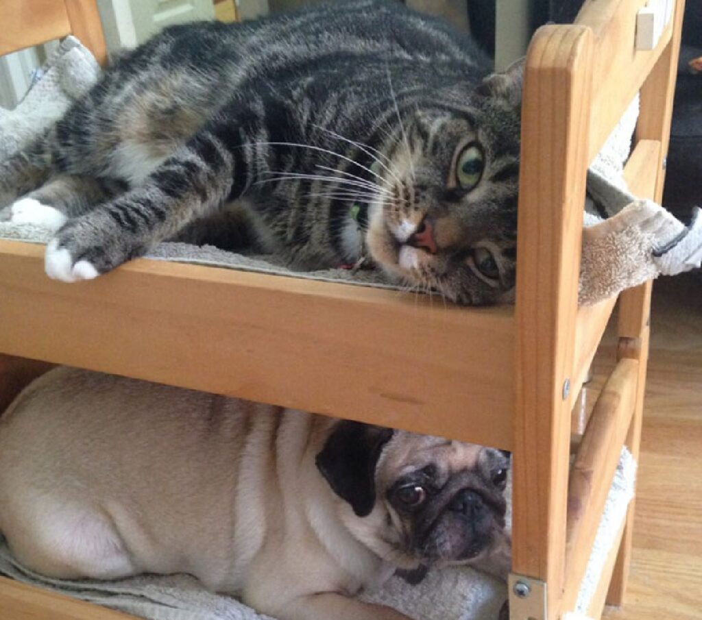 gatto soriano con sotto cane
