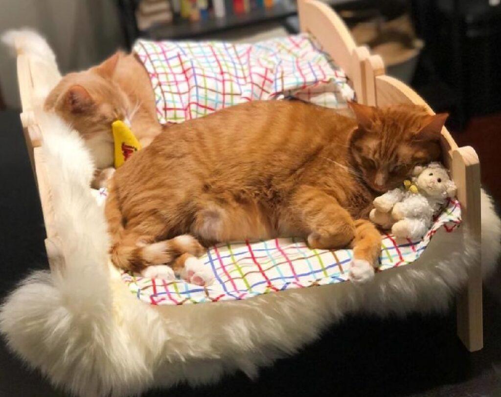gatti relax sul letto