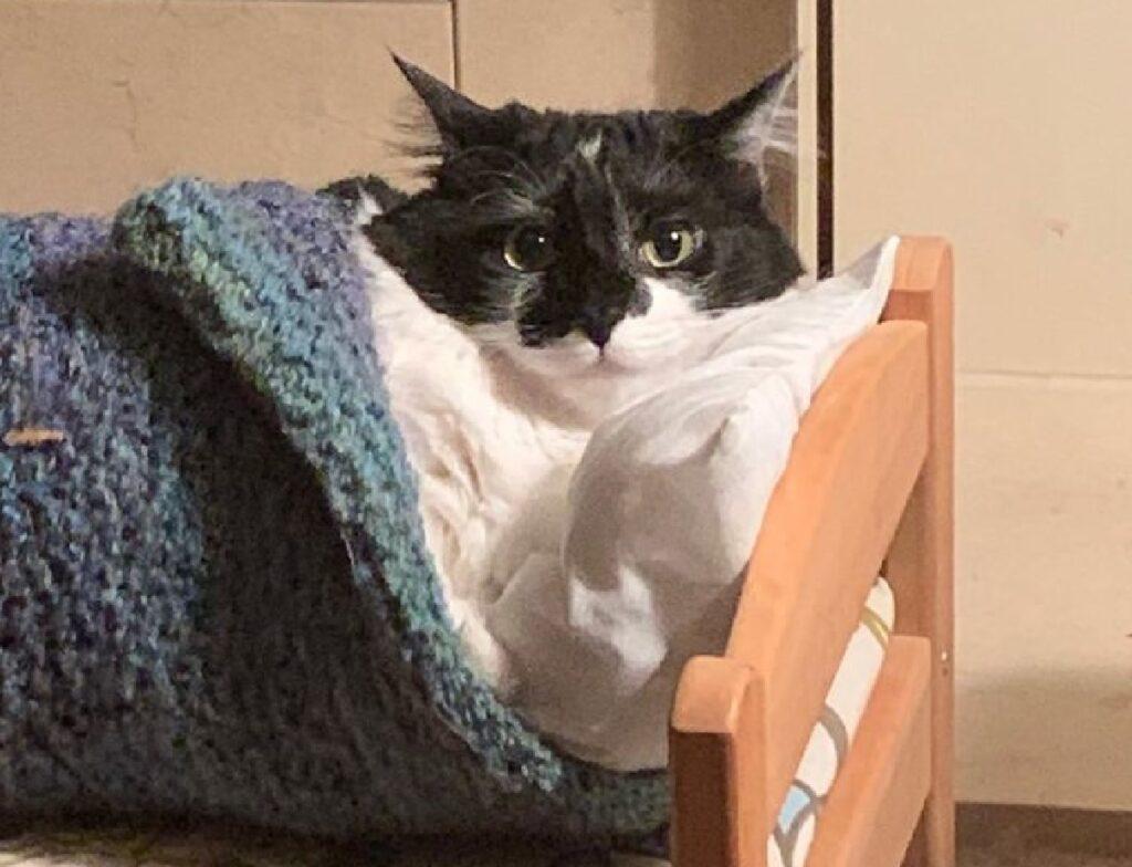 gatto bianco nero cuscino e coperte