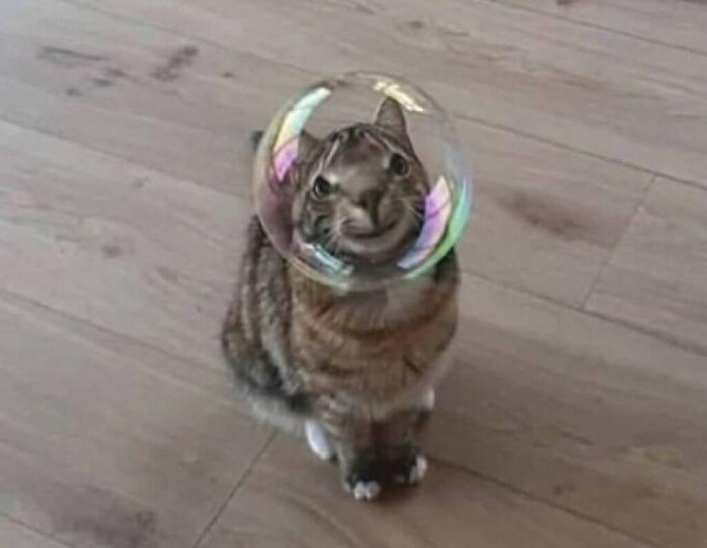 gatto faccia bolla sapone