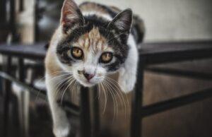 gatti che il mondo non può non osservare