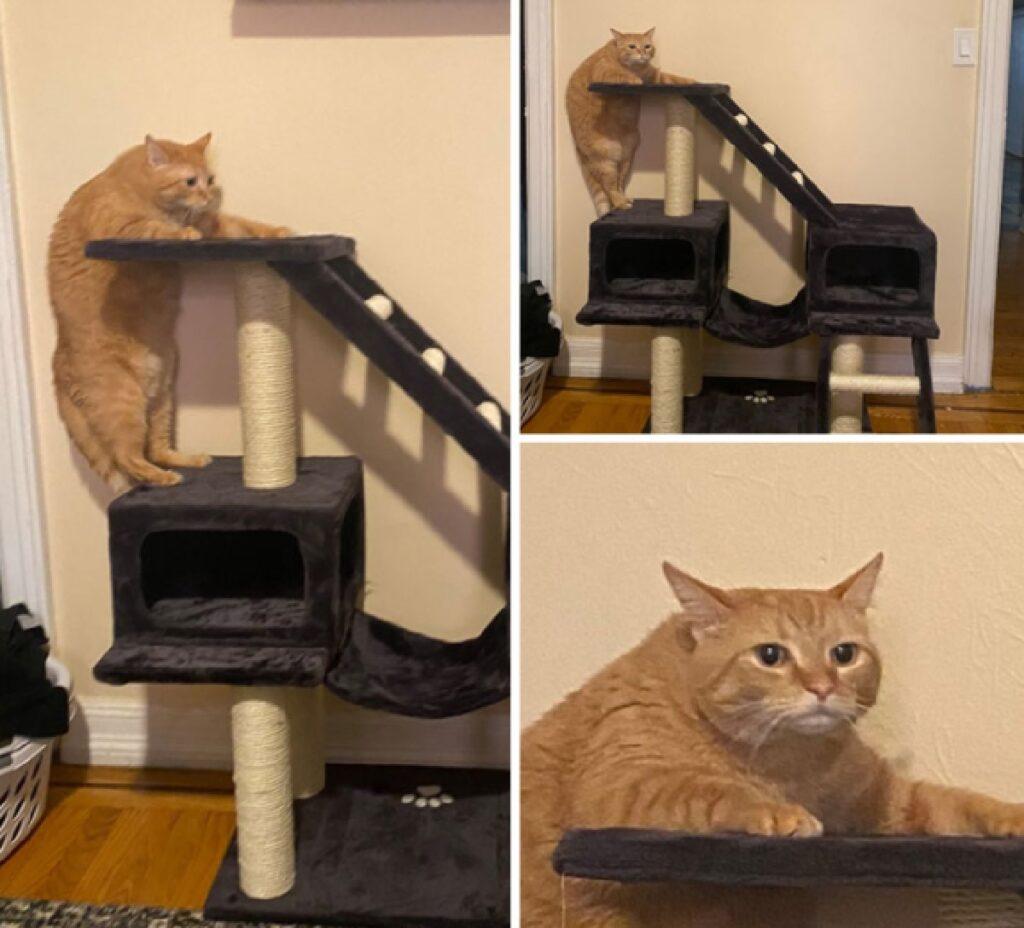 gatto rimasto bloccato