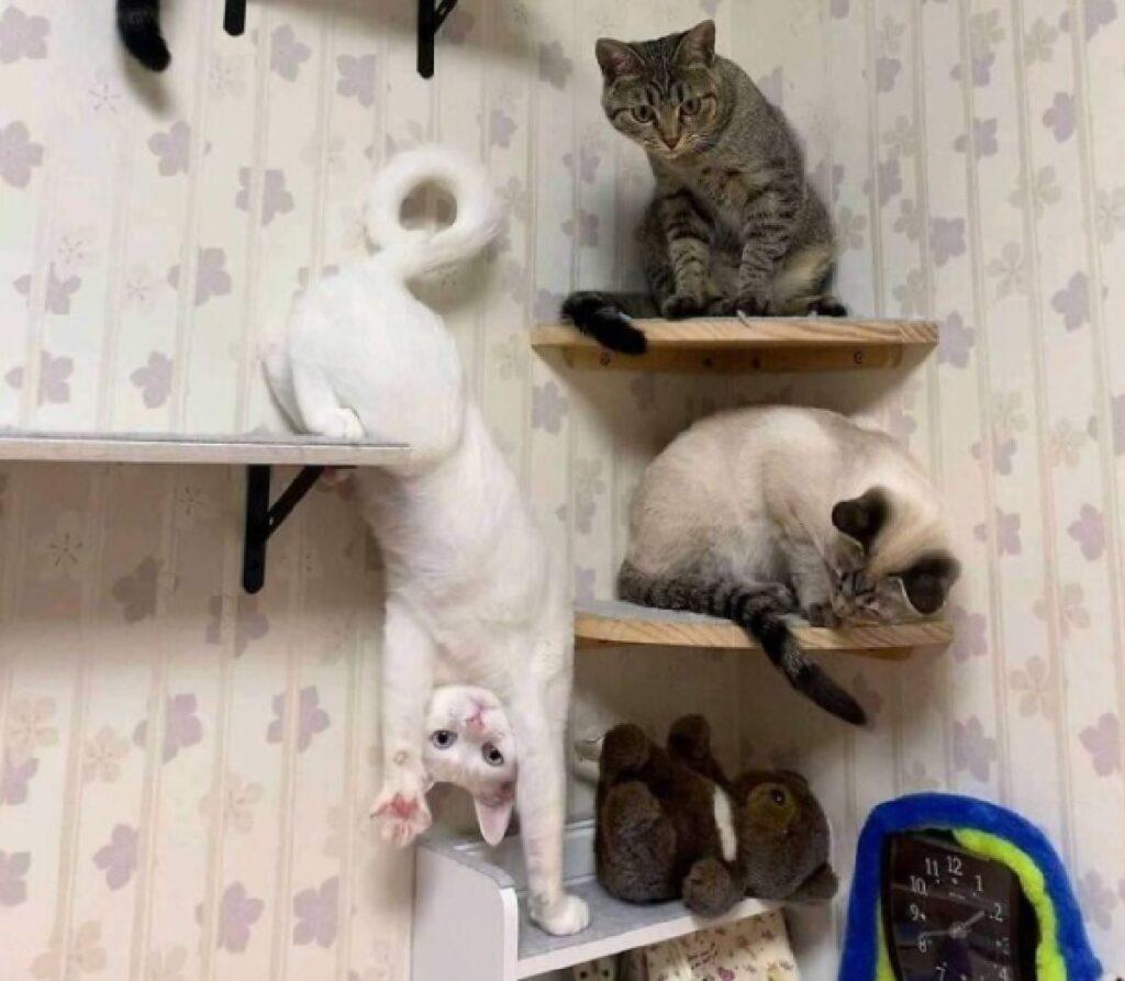 gatto bianco girato al contrario