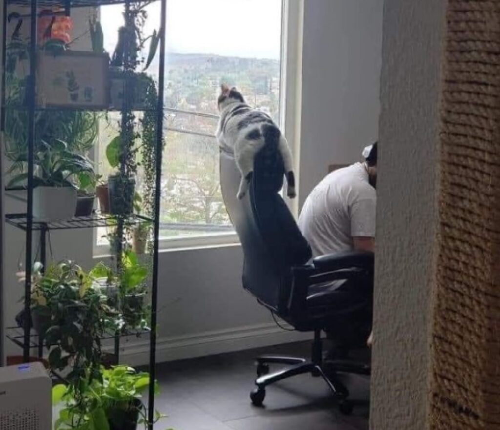 gatto seduto su poltrona