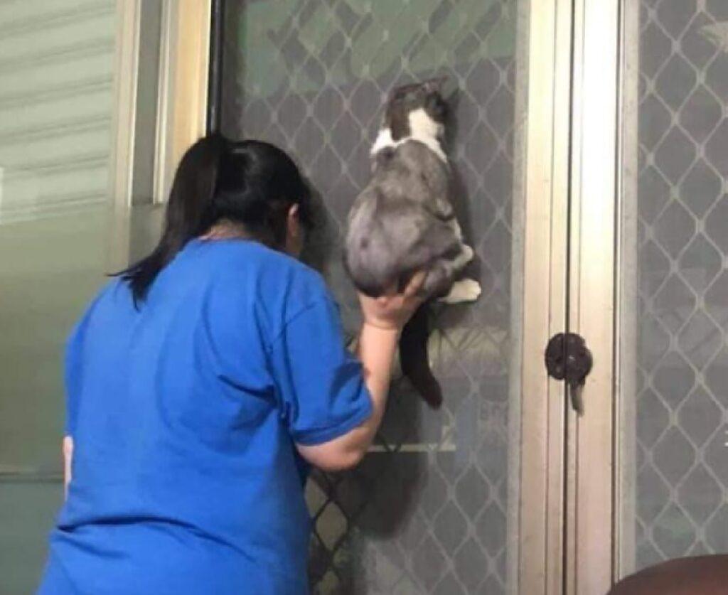 gatto sollevato da proprietaria