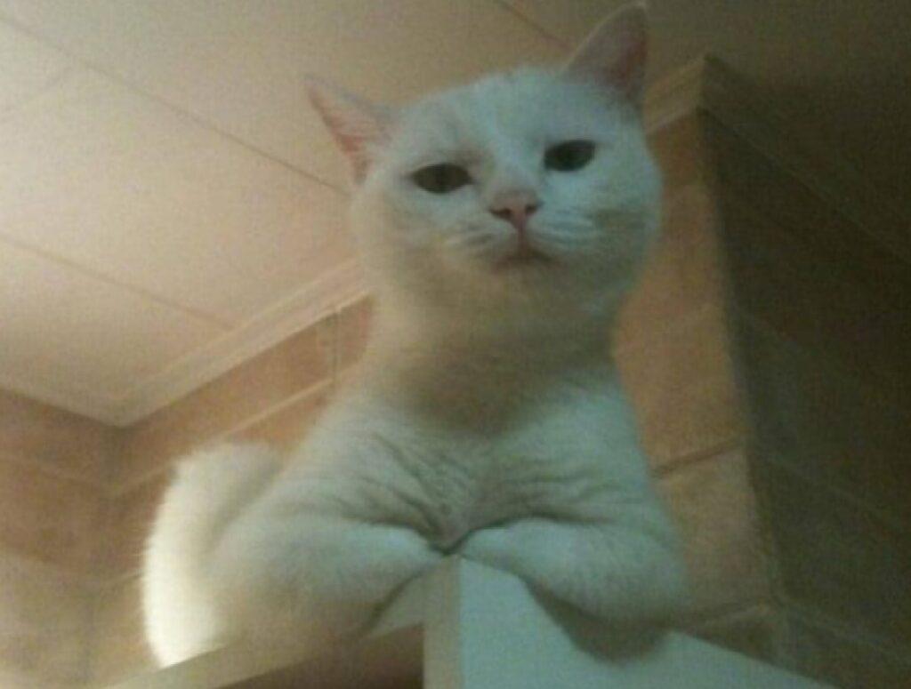 gattino bianco riposino