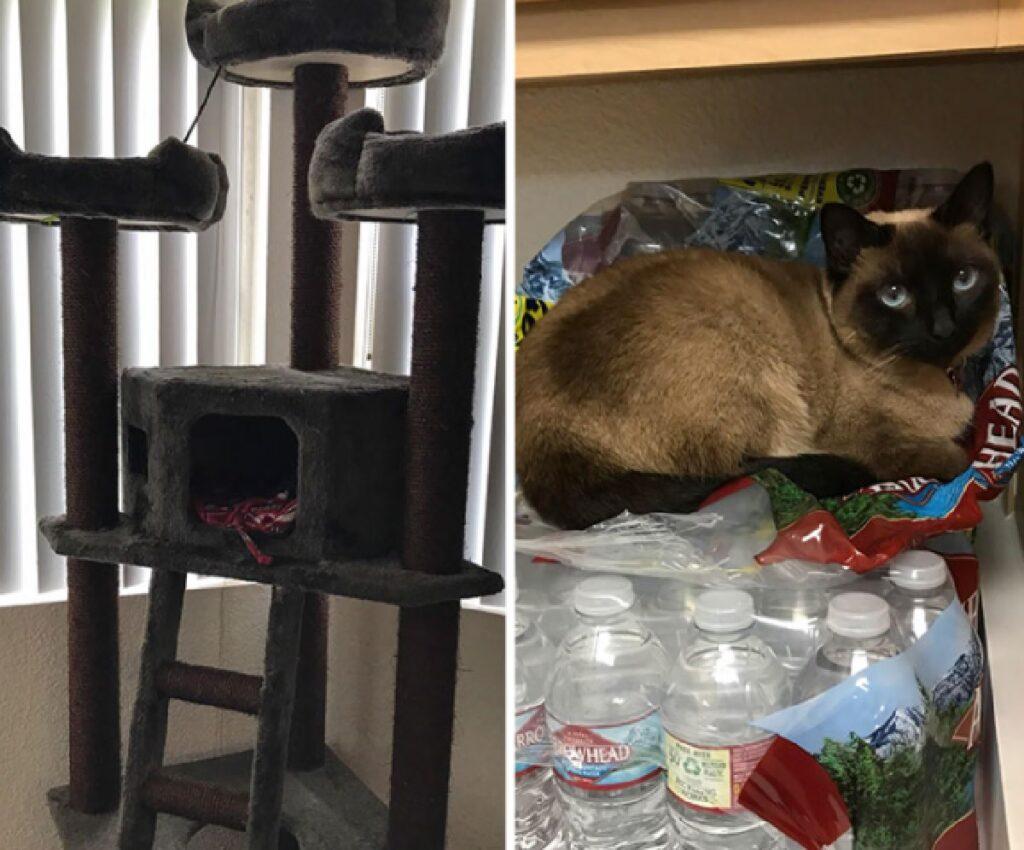 gatto preferisce bottiglie plastica