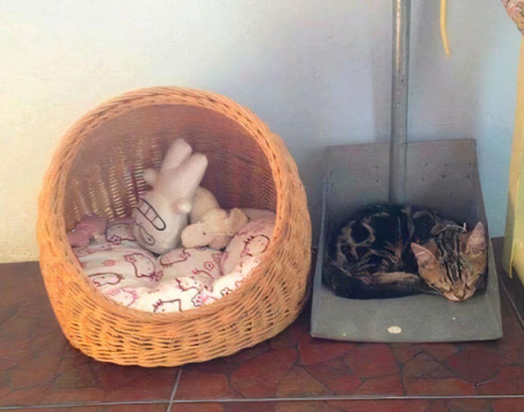 gatto adora dormire su paletta