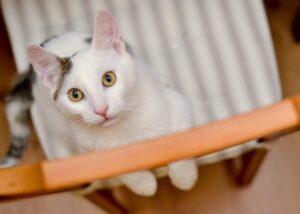 gatti che mettono in mostra i loro difetti