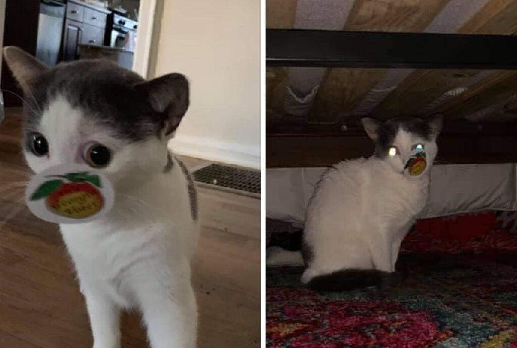 gatto adesivo rimasto attaccato