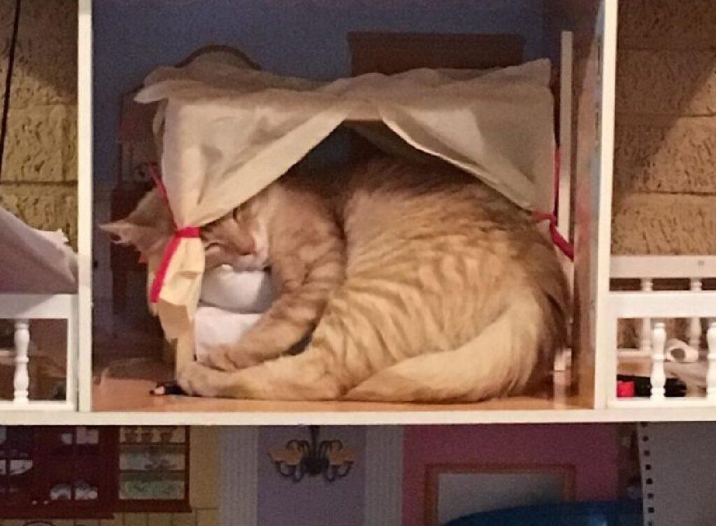 gatto rosso dorme letto minuscolo