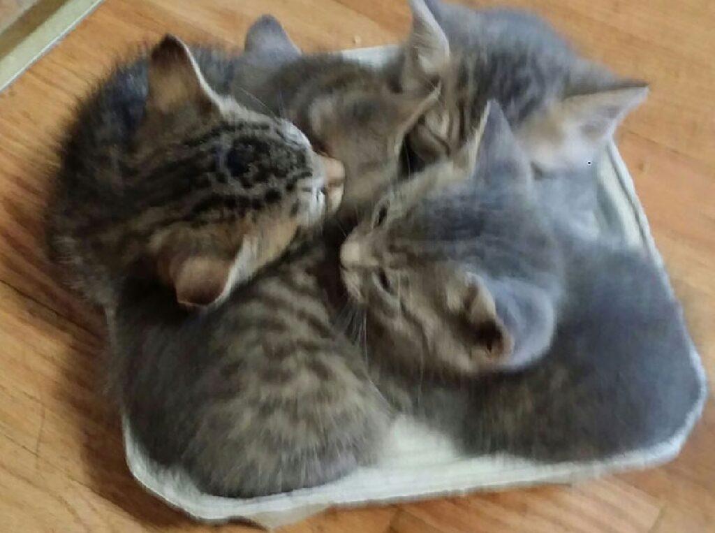 gattini occupano stesso spazio