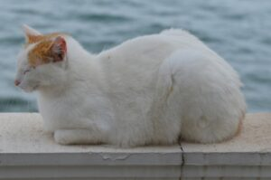 foto gatti che non hanno capito come dormire