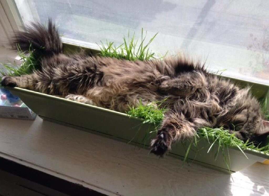 gatto dorme dentro vaso