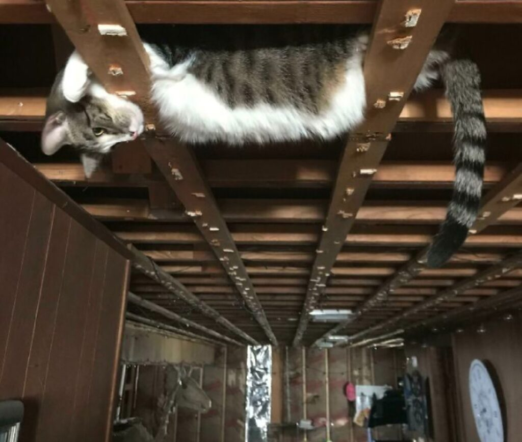 gatto sulle traverse di legno