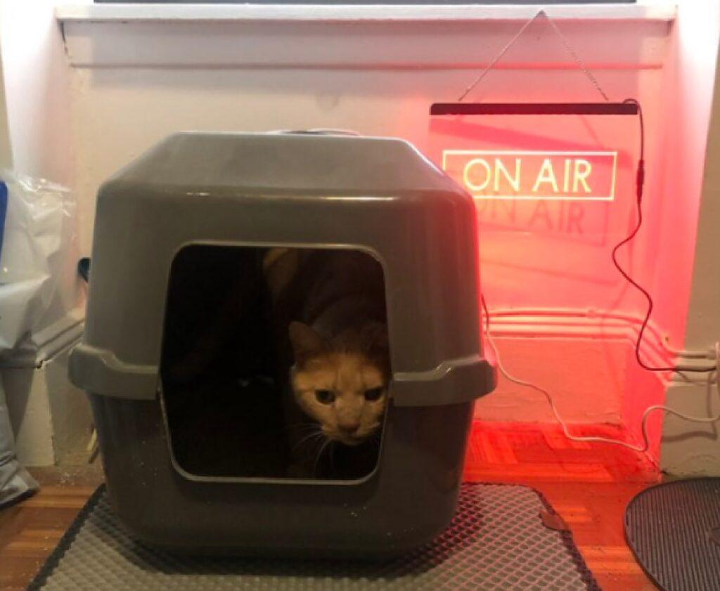 gatto dentro cuccia grigia